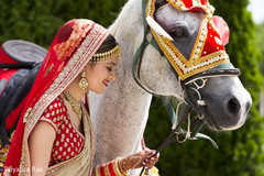 indian bride,baraat horse