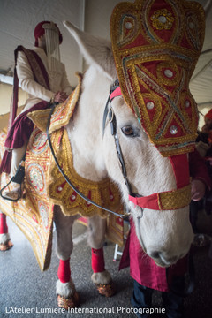 indian wedding baraat,baraat horse,indian groom