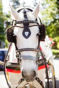 baraat,transportation,baraat horse