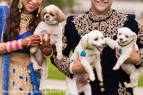 puppies,indian wedding