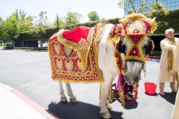 Indian wedding baraat horse