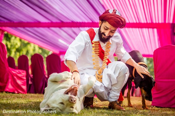 Indian groom playing with his dogs