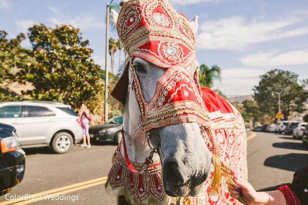 indian wedding baraat,baraat,baraat horse