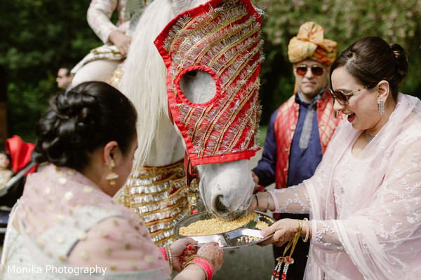 white horse,baraat,indian wedding