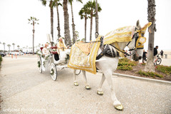 Elegant Indian groom riding on a baraat carriage with white horse.