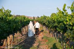 Indian newlyweds walking in a vineyard