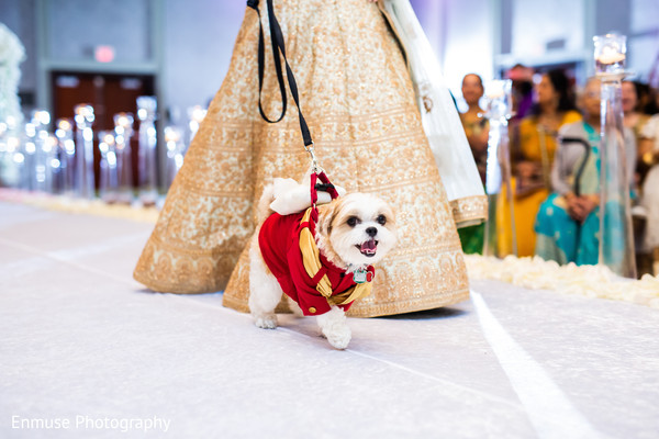 Lovely Indian bridesmaid with puppy.