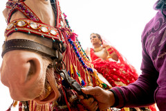 Detail of the horse decoration transporting the maharani