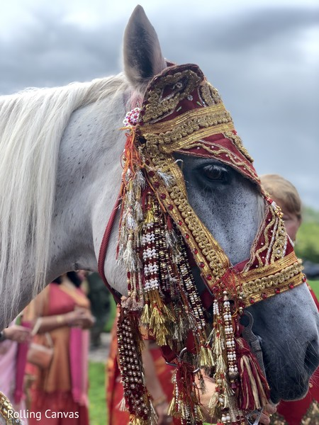 Capture of the beautiful white horse for the baraat