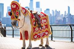 Elegant Indian groom's baraat white horse.
