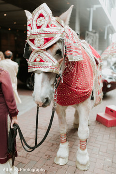 Detail of the horse used at the Baraat