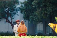 Indian lovebirds magical capture.