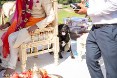 Special canine guest during the ceremony