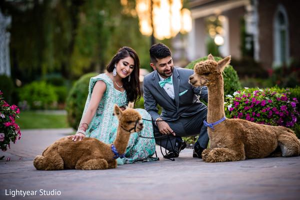 Sweet couple with llamas capture.