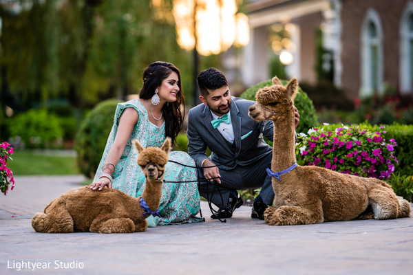 Indian bride and groom excited by  caress llamas.