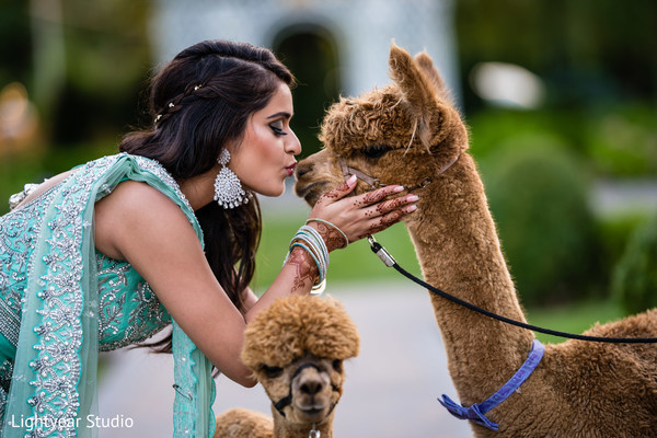 Sweet Indian bride kissing a llama.