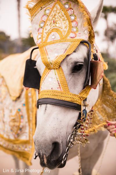 Elegant baraat white horse.