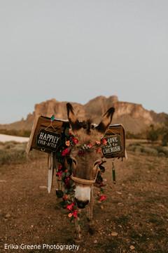 Adorable indian wedding burro