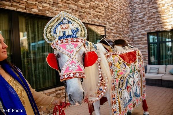 Elegant Indian groom's white horse.