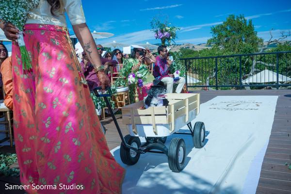 Indian wedding 4 legged friend