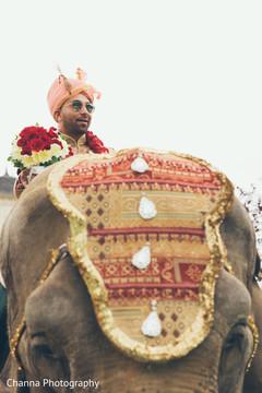 Amazing capture of elephant and Raja