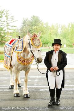 Beautiful baraat horse