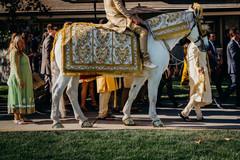 Incredible Indian grooms baraat horse decor.