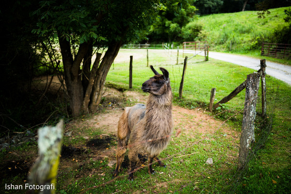 See this lovely Llama photography.
