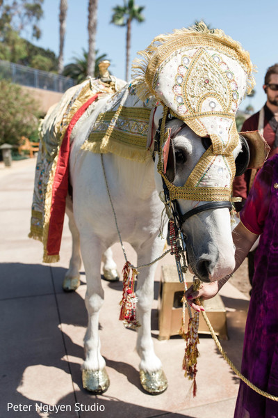 Golden and white baraat horse outfit.