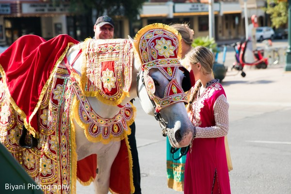 Indian wedding Baraat white horse.