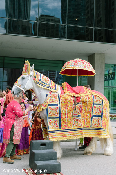 Indian pre-wedding baraat horse.