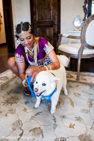 Bengali bride with purple sari and dog in Dripping Springs, TX Fusion Wedding by Svetlana Photography