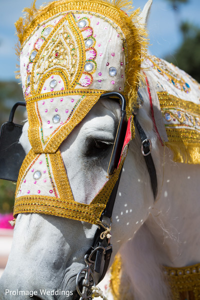 Lovely white horse for Baraat in Santa Barbara, CA Indian Wedding by ProImage Weddings