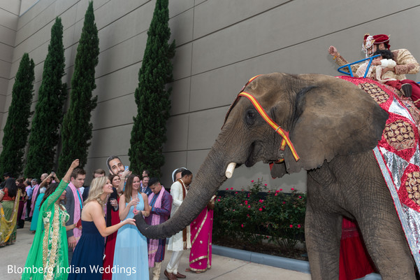wedding elephant,just married,unique wedding details