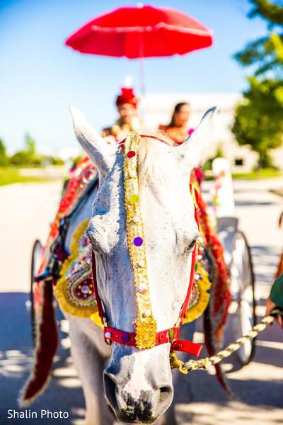baraat horse,baraat procession