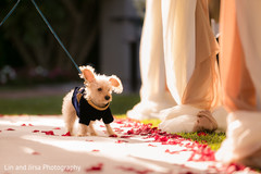 fusion wedding,indian fusion wedding,fusion wedding ceremony,indian fusion wedding ceremony,fusion ceremony,pup at fusion wedding,dog fusion wedding,pet at fusion wedding,pet at fusion ceremony