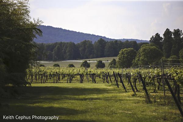 Vineyard wedding venue.