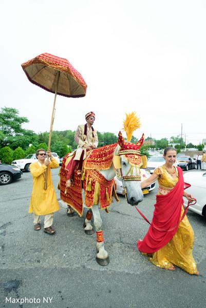 horse,white horse,indian wedding baraat
